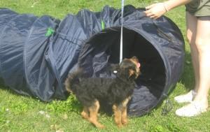 Addestramento Agility Dog