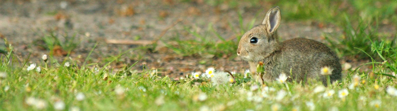 Conigli di varie razze, età e peso